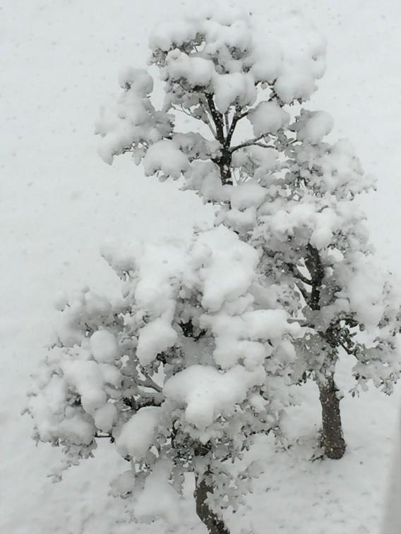 大雪の翌日は無理をしないでね 予約のあなたにお知らせ
